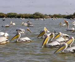 Kumarakom Vacation